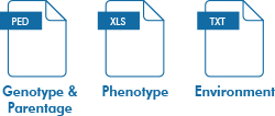 Genotype and Parentage, Phenotype, Environment
